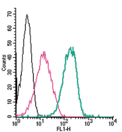 Cell surface detection of AdenosineA2BReceptor by indirect flow cytometry in live intact human THP-1 monocytic leukemia cells: