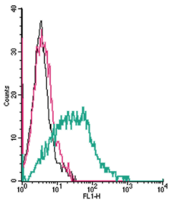 Cell surface detection of α2A-Adrenergic Receptor by indirect flow cytometry in live intact human MEG-01 megakaryocytic leukemia cells:
