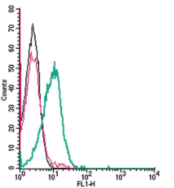 Cell surface detection of KISS1 Receptor by indirect flow cytometry in live intact human Jurkat T-cell leukemia cells: