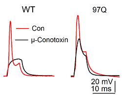 µ-Conotoxin GIIIB