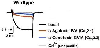 ω-Conotoxin GVIA