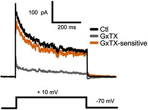 Guangxitoxin-1E