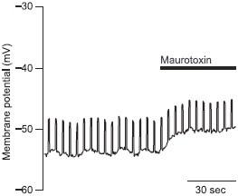 Maurotoxin