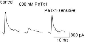 Phrixotoxin-1