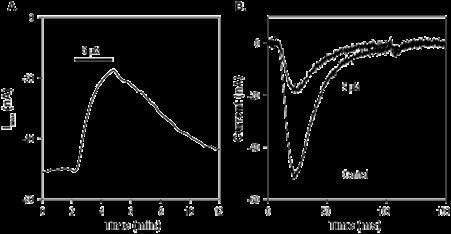 Alomone Labs TTA-P2 (S-enantiomer) blocks T-type CaVchannels expressed inXenopusoocytes.