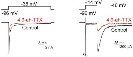 4,9-Anhydrotetrodotoxin
