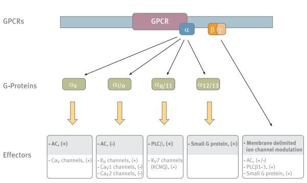 Ion Channel Modulation by G-Protein Coupled Receptors