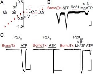 BomoTx Toxin