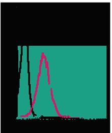 Anti-CD39 (extracellular)-FITC Antibody