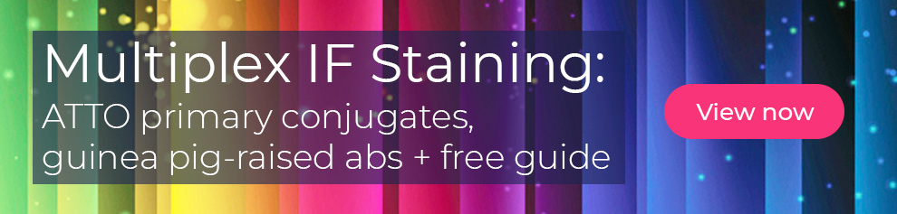 Multiplex IF Staining: ATTO primary conjugates, guinea pig-raised abs + free guide