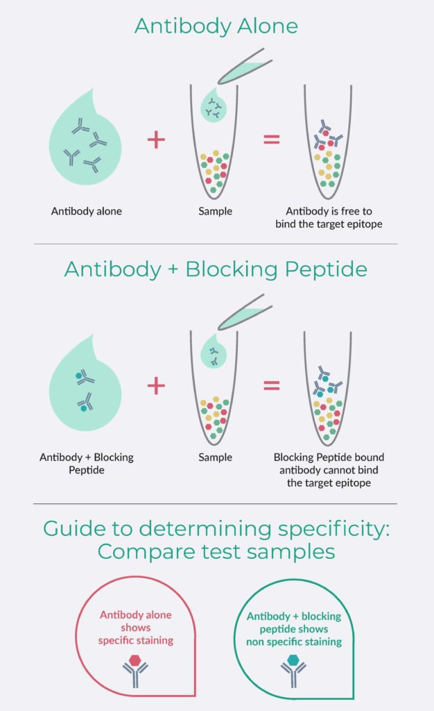 Peptide Blocking Overview Diagram