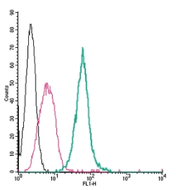 Cell surface detection ofNeuropilin-1by direct flow cytometry in live intact mouse J774 macrophage cells: