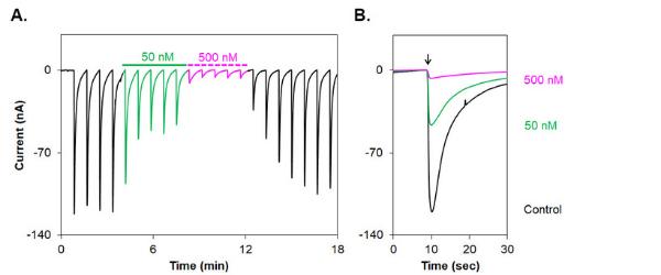Alomone Labs Alpha-Conotoxin TxID inhibits α3/β4 nAChR heterologously expressed in Xenopusoocytes.