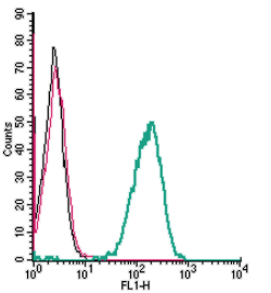 Cell surface detection of P2Y13 by indirect flow cytometry in live intact human THP-1 monocytic leukemia cell line: