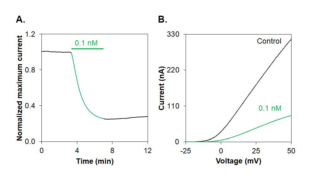 Alomone Labs ShK-186 blocks KV1.3 channels expressed in Xenopus oocytes.