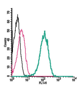 Cell surface detection ofTMC1by indirect flow cytometry in live intacthuman THP-1monocyticleukemiacell line: